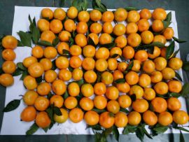 """Сладкие мандарины от """"ЦинВэй"""""""