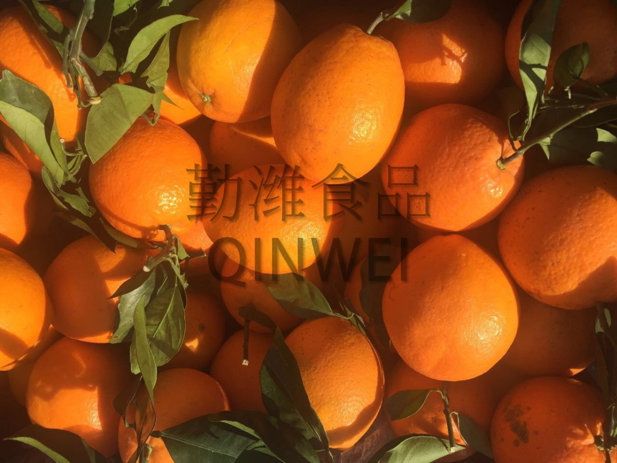 """Апельсины """"Навел"""""""